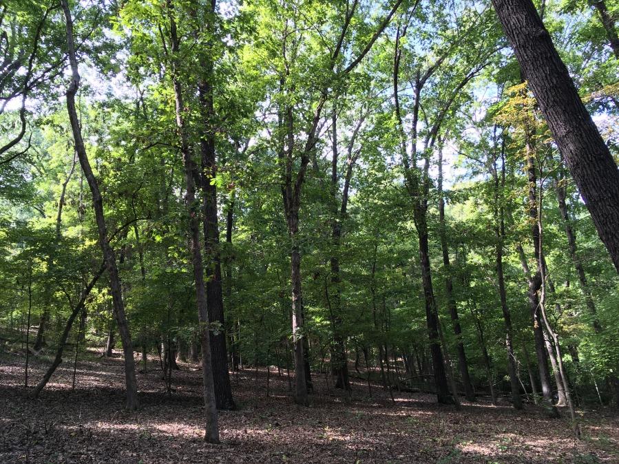 AK woods